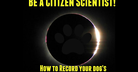 Solar eclipse and pets: Scientists want to your help