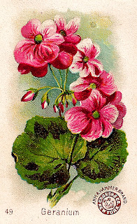flower geranium image trade card victorian clipart printable
