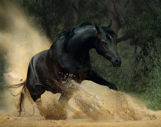 Colourful Cute Wallpapers عًٍرٌٍآقٌٍيَ للنْخٌِآعًٍ Black Horse