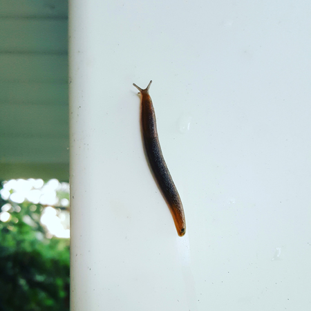 image of a slug crawling up a post on my porch