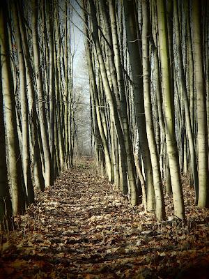 Uroczysko Tyniec, lasy w okolicy Krakowa, grzyby zimowe, grzyby nadrzewne, rozszczepka pospolita Schizophyllum commune, trzęsak pomarańczowożółty – Tremella mesenterica, kisielnica kędzierzawa - Exidia plana, wrośniak Tremates, zimówka aksamitnotrzonowa - Flammulina velutipes