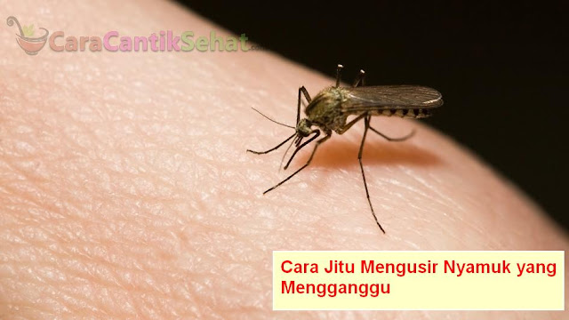 Cara mengusir nyamuk