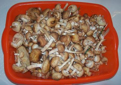 дары осени: грибы - опята