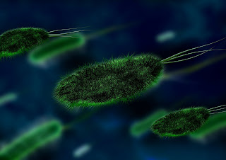 green germs