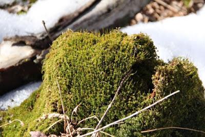 moss? Identification?