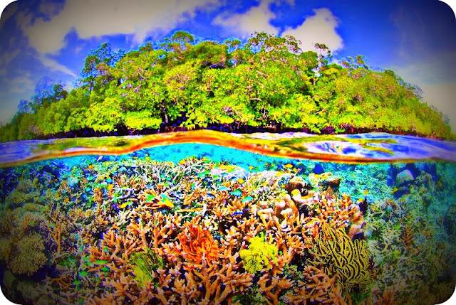 Amerika Serikat Dukung Pelestarian Ekosistem Laut Raja Ampat