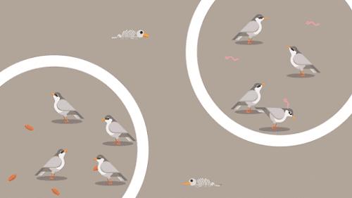 Burung Finch
