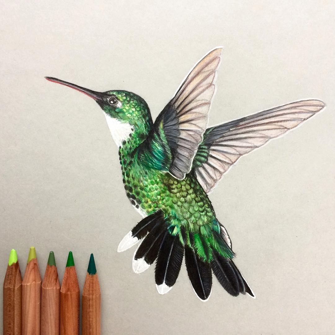 16-Hummingbird-Simon-Balzat-Colored-Pencils-make-Beautiful-Drawings-www-designstack-co