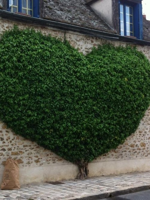 heart shaped greenery