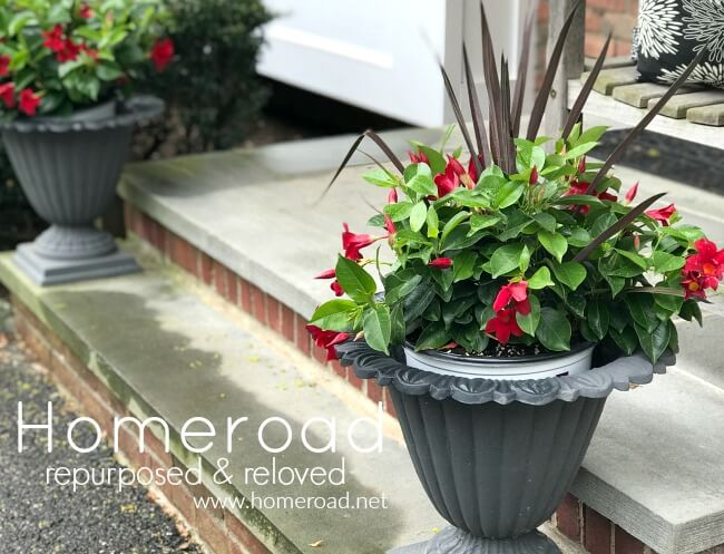 red flowered plants in iron urns on the stoop