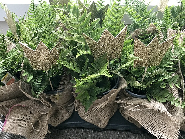 burlap wrapped ferns with crowns for table centerpiece
