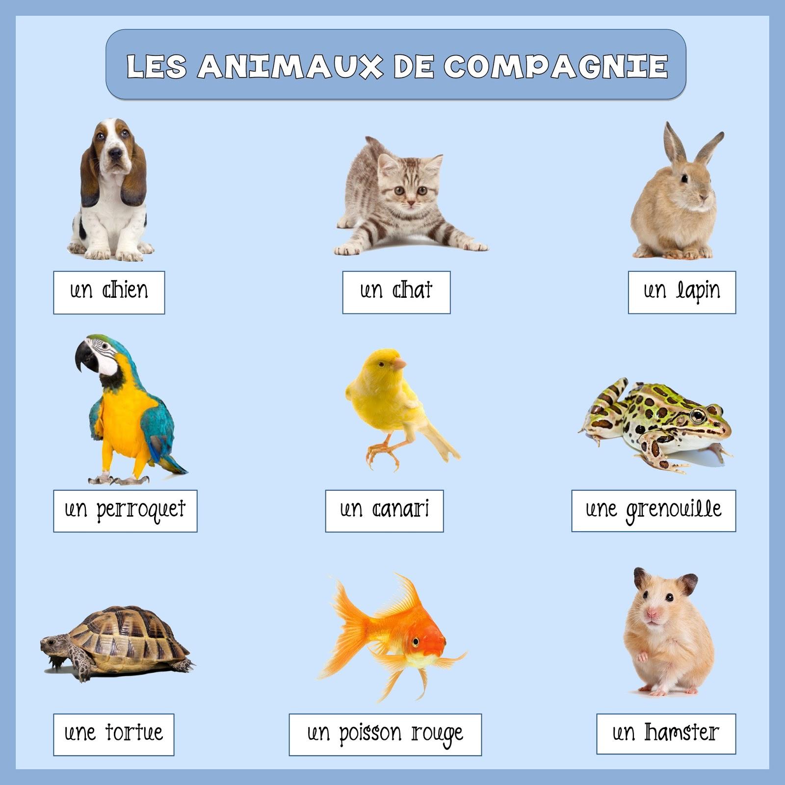 Zwierzęta - zwierzęta domowe 1 - Francuski przy kawie