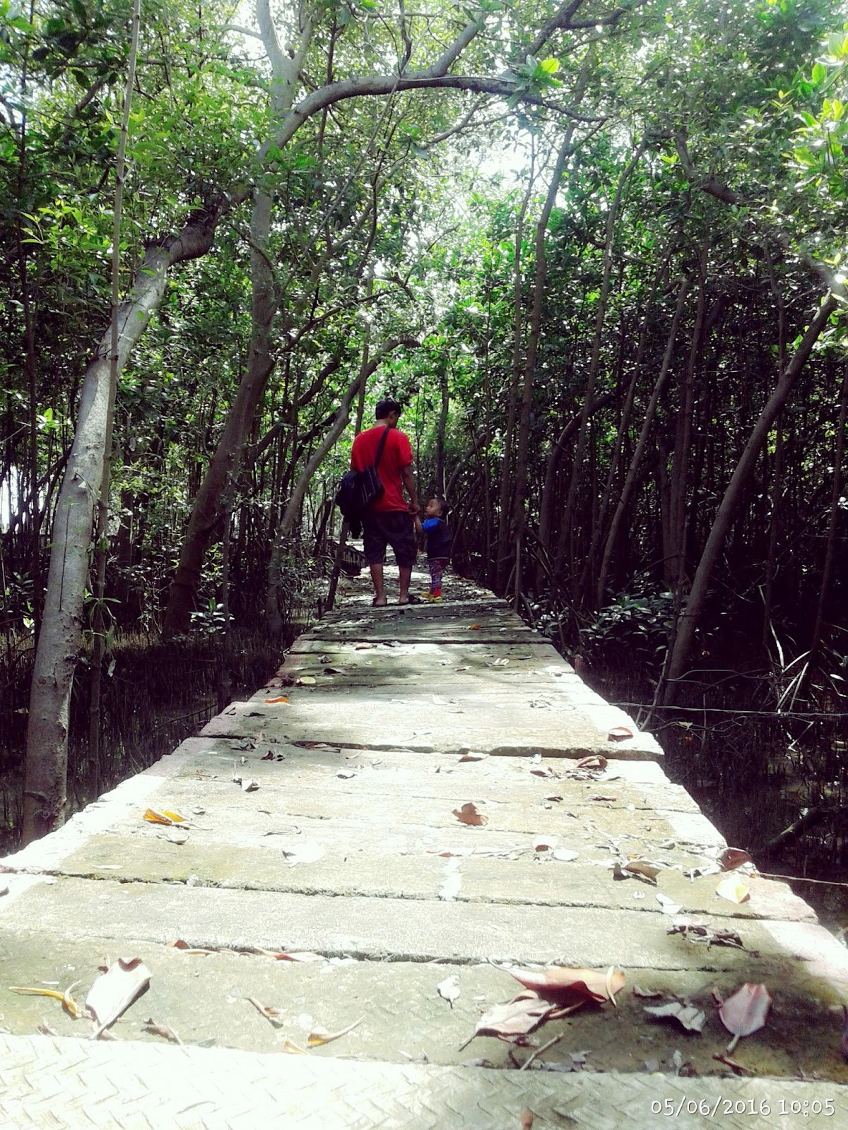 Simple Adventurer Pemalang Kaya Pesona Hutan Mangrove