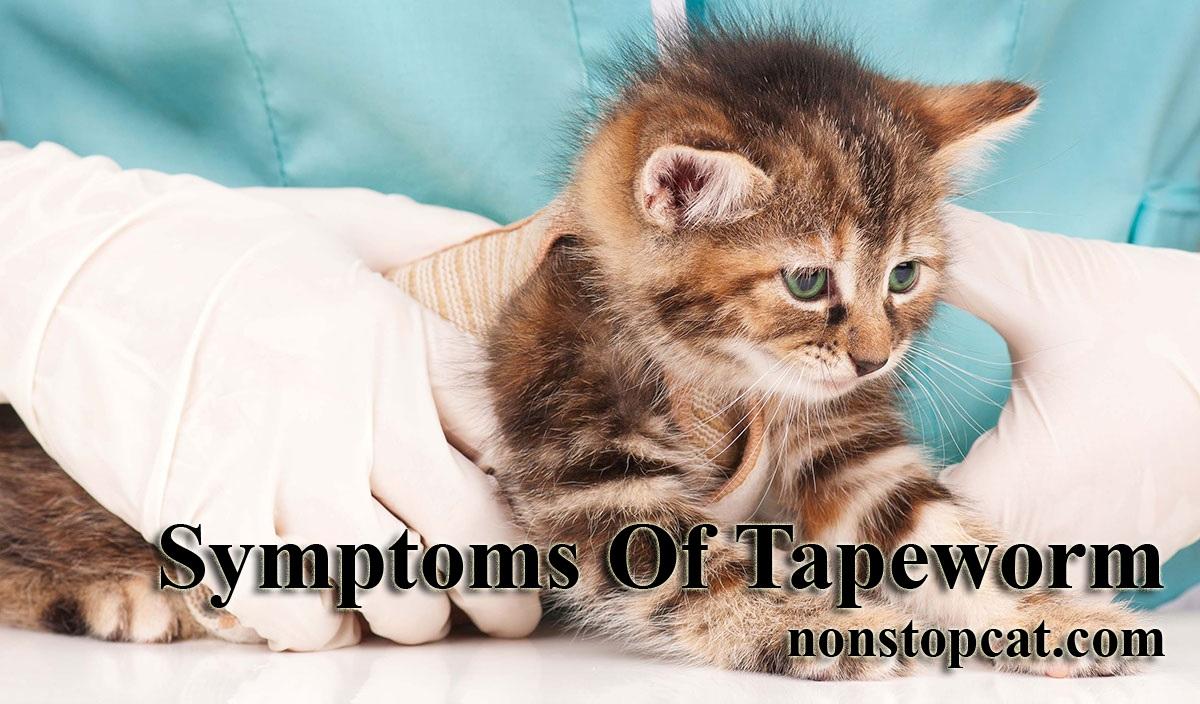 Symptoms Of Tapeworm