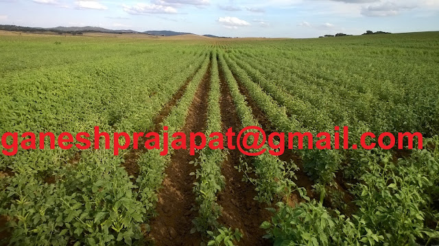 guar, guar gum, guar gum news, guar news, guar gum cultivation, ncdex guar price, ncdex guar gum price, guar gum current rate, guar gum farmign, guar gum cultivation consultancy, guar gum export demand, ग्वार, ग्वार गम, ग्ग्वर भाव, guar, guar gum, guar gum news, guar gum export-2017, guar gum export-2018, guar gum demand-2017, guar gum demand-2018, guar gum production, guar gum cultivation, guar gum cultivation consultancy, Guar, guar gum, guar price, guar gum price, guar demand, guar gum demand guar seed production, guar seed stock, guar seed consumption, guar gum cultivation, guar gum cultivation in india, Guar gum farming, guar gum export from india,Fundamentally Guar seed and guar gum are very strong , Guar, guar gum, guar price, guar gum price, guar deamand, guar gum demand, guar seed production, guar seed stock, guar seed consumption, guar gum cultivation, guar gum cultivation in india, Guar gum farming, guar gum export from india , guar seed export, guar gum export, guar gum farming, guar gum cultivation consultancy, today guar price, today guar gum price, ग्वार , ग्वार गम, ग्वार मांग, ग्वार निर्यात , ग्वार उत्पादन, ग्वार कीमत, ग्वार गम मांग