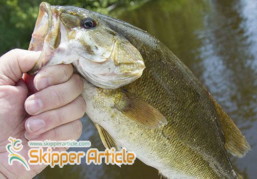 Bass Fishing Facts and More