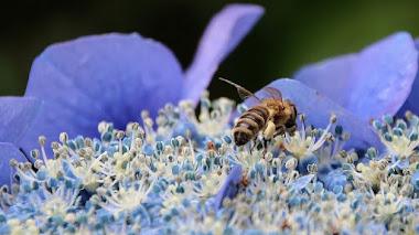 Cursos en el Real Jardín Botánico: Buenas prácticas que favorecen la biodiversidad en el jardín