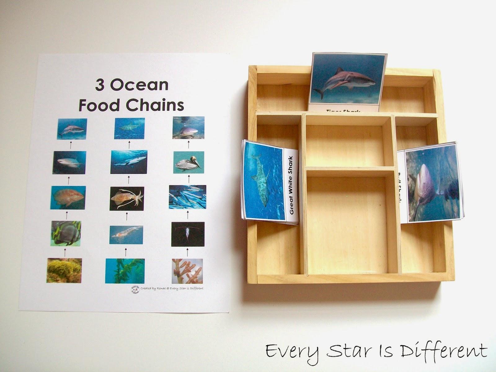 Shark Unit W Free Printables