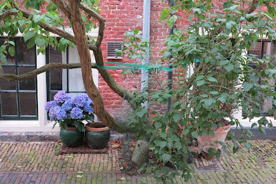 container garden, tree, hydrangea, purple