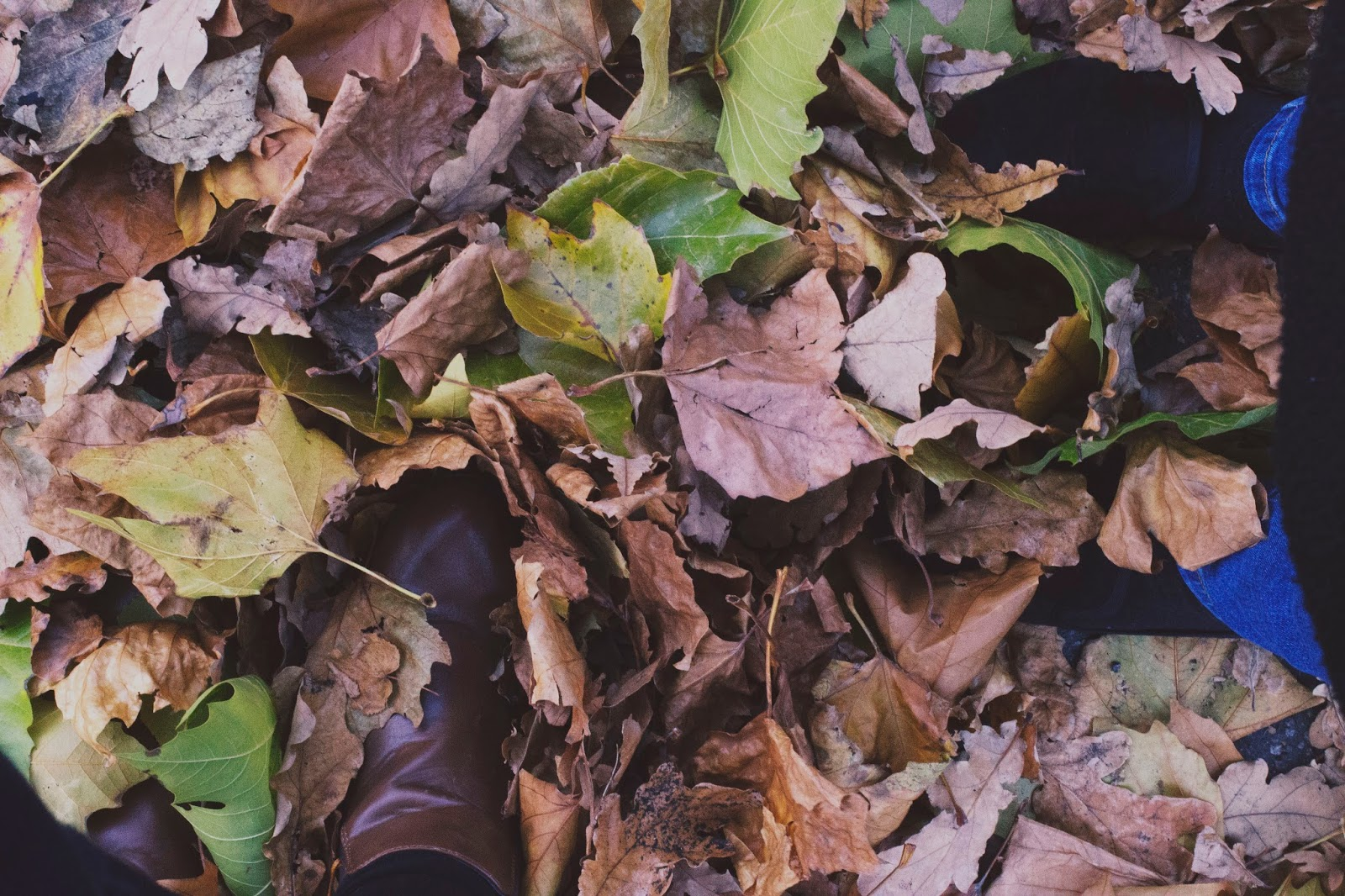 Leaves, Autumn, Fall, Lifestyle Bloggers, Derbyshire Bloggers, Derby Blogs, Katie Writes,