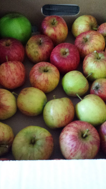 Store apples successfully through out the winter