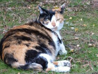 Cara Agar Kucing Tidak Hamil