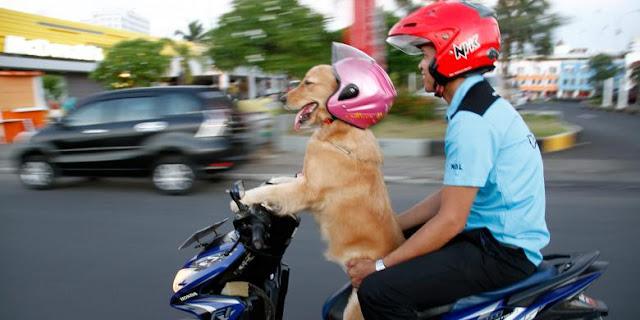Ingin Lucu - Anjing Pintar Banget