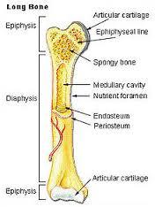 tulang.jpg