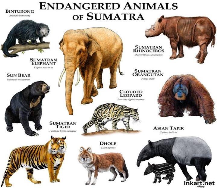 Animais Ameaçados de Sumatra