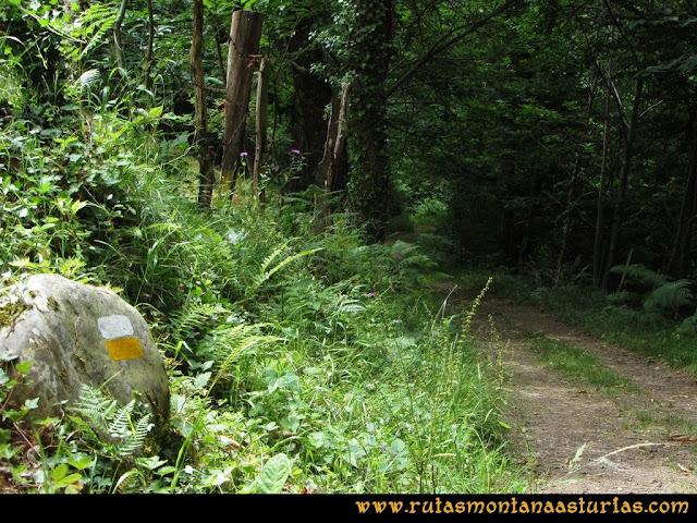 Ruta Bosques de Moal: Marca de pintura en el bosque