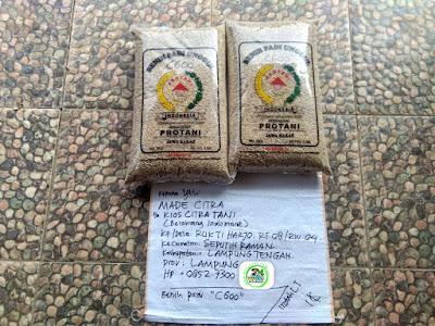 Benih Padi Pesanan    MADE CITRA Seputih Raman, Lampung Tengah.    Benih Sebelum di Packing.