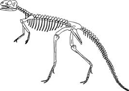 Malvorlagen Dinosaurier Skelett X Claudia Schiffer