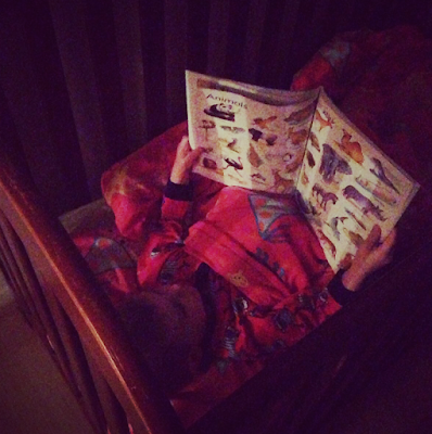 Bert reading Usborne book in his cot