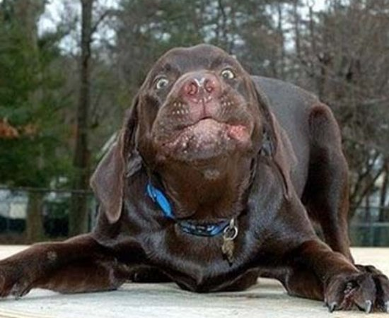 Ugly Looking Dog Breeds