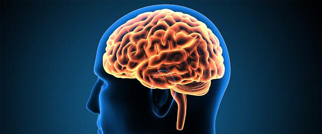 Beyne İyi Gelen Yiyecekler