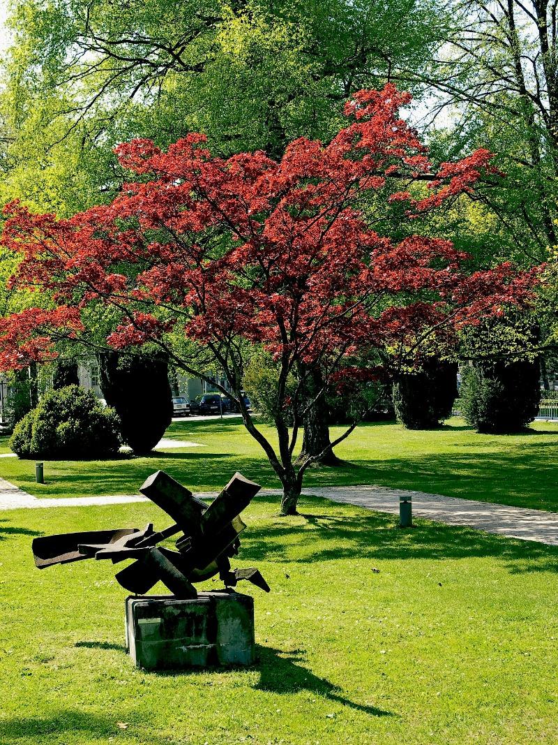 acer palmatum arce japon s guia de jardin. Black Bedroom Furniture Sets. Home Design Ideas