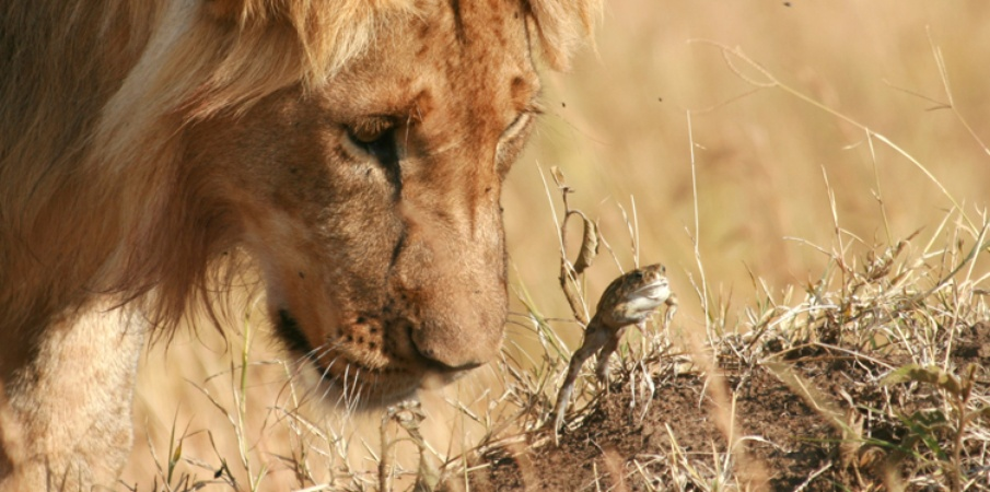 masai mara tour operators