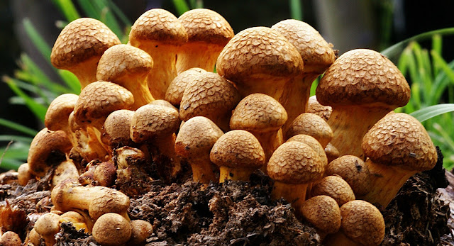 Interesting Facts And Information About Mushroom In Hindi.