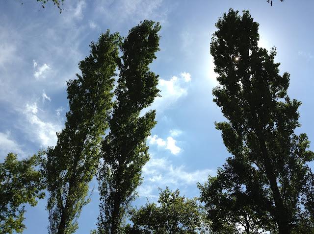 イメージ画像:背の高い木
