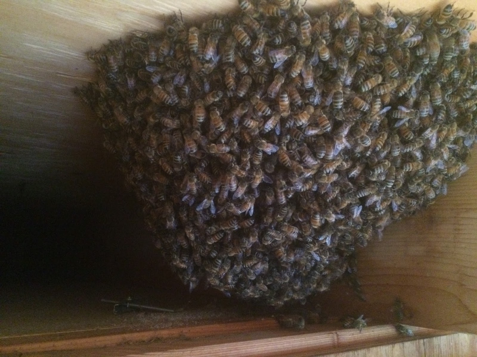 i am asked daily to come get bees this is what i tell them eco
