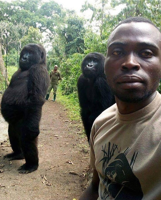Anti-poachers and the gorillas they guard