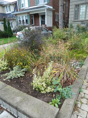 Fall Clean up Toronto Bedford Park Front Garden before by Paul Jung Gardening Services