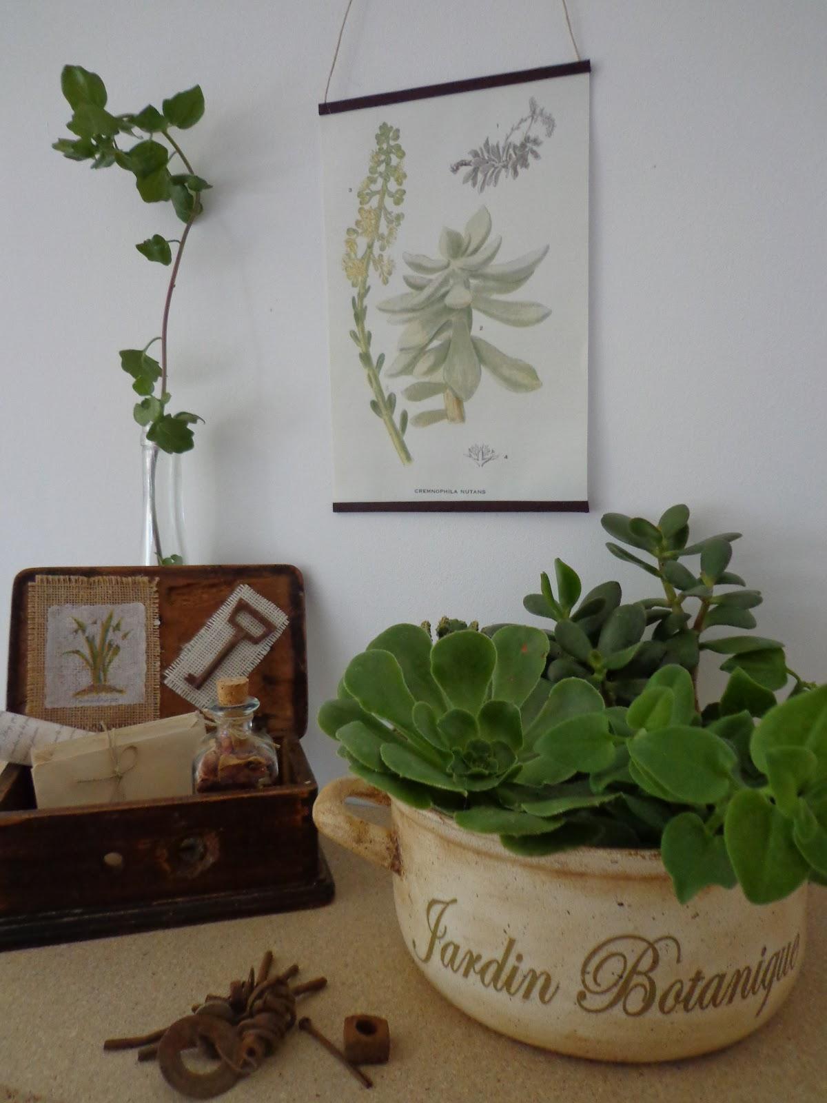 Creando un pequeño espacio botánico | Entre anhelos y caprichos