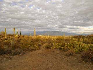 view of catalina mountains from tucson mountain park