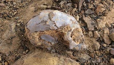 Primata Prasejarah Berusia 13 Juta Tahun Ditemukan