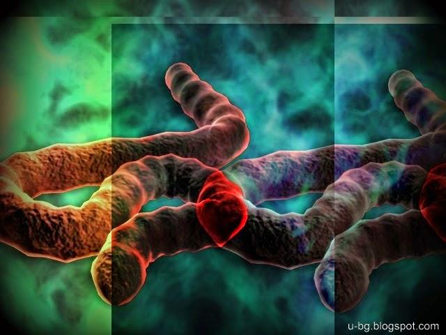 Какво е това вирус Ебола, как да се предпазим