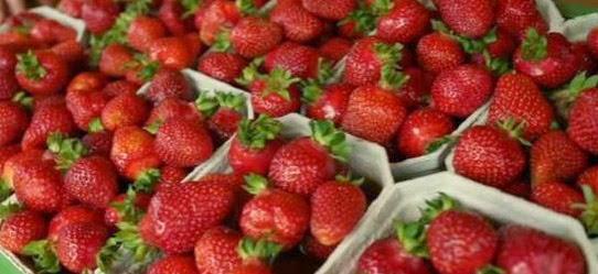 Gewächshaus Erdbeeren