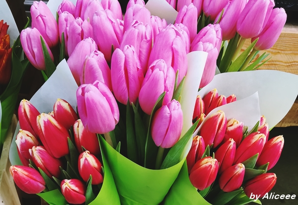 dorchester-flowers-Uk