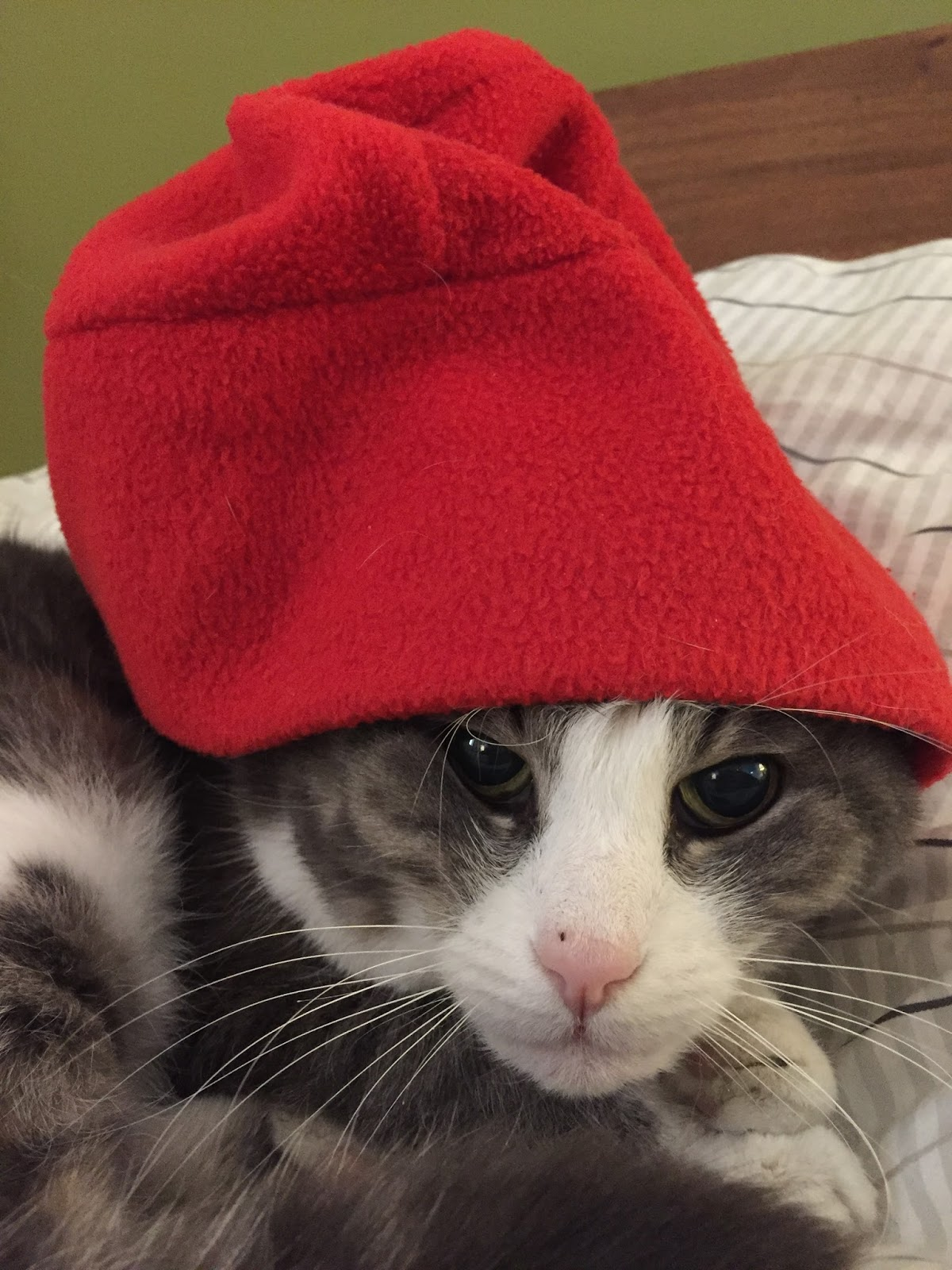 The Cat And The Hat Illustrator