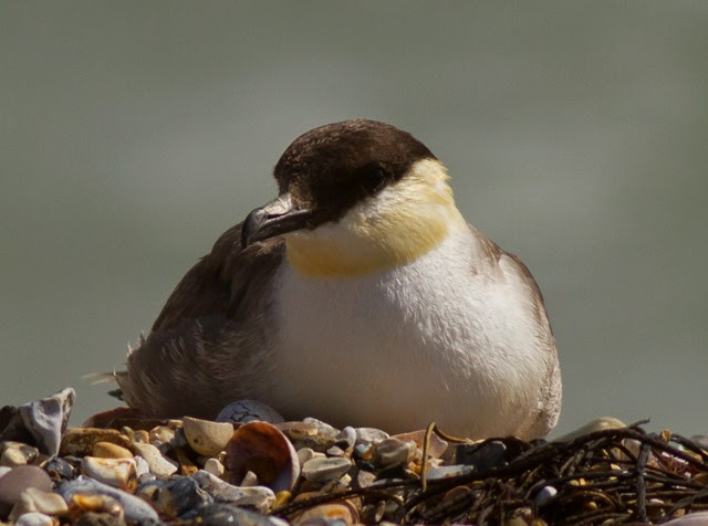 The Nature Quest August 2014-1206
